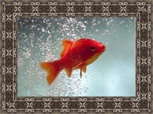 vis met lijst